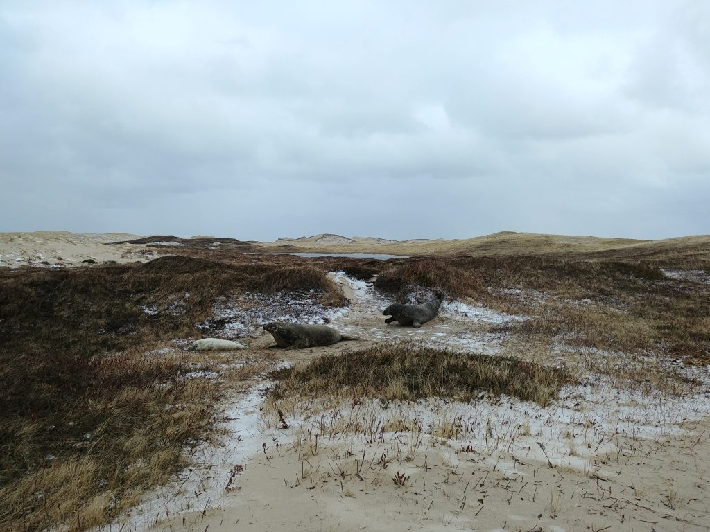 Sable Island's Vulnerable Ecosystems