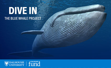 Dive In: The Blue Whale Project